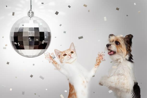 hund und katze neu jahre feier, party - silvester mit hund stock-fotos und bilder