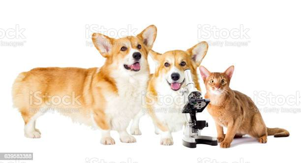 Dog and cat on a white background picture id639583388?b=1&k=6&m=639583388&s=612x612&h=hvd1wxyszcooxqkqmafwykmnnhq 5xy c5kbc6hldaq=