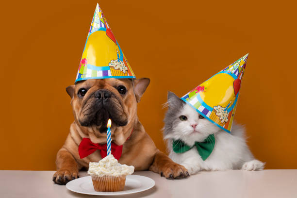 dog and cat on a yellow isolated background dog and cat on a yellow isolated background celebrate birthday happy birthday stock pictures, royalty-free photos & images