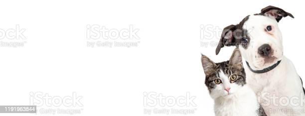 Dog and cat on side of white web banner picture id1191963844?b=1&k=6&m=1191963844&s=612x612&h=mn44l71svo1qli yhlnxexbcqkrdm661kammqyrzxiu=