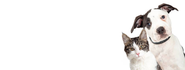Dog and Cat on Side of White Web Banner stock photo