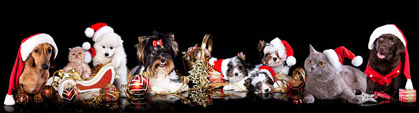 Dog and cat on the background of christmas decorations picture id461236483?b=1&k=6&m=461236483&s=612x612&w=0&h=cvpgszvuaszxhev0pndpc53azrbmrejst5v6fbbl2ve=