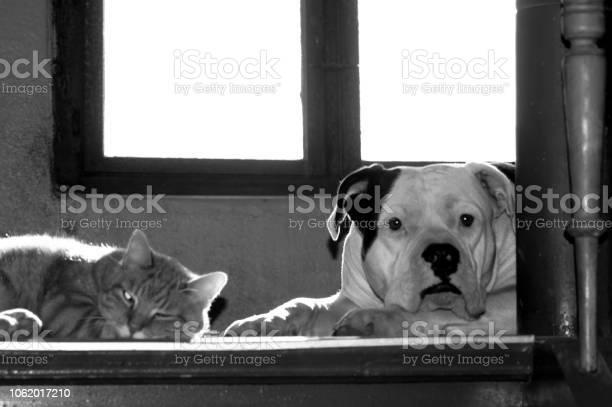 Dog and cat on the stairs picture id1062017210?b=1&k=6&m=1062017210&s=612x612&h=k h4pvzsshklim2 vjc46bmazwiscmiieooghapcv4w=