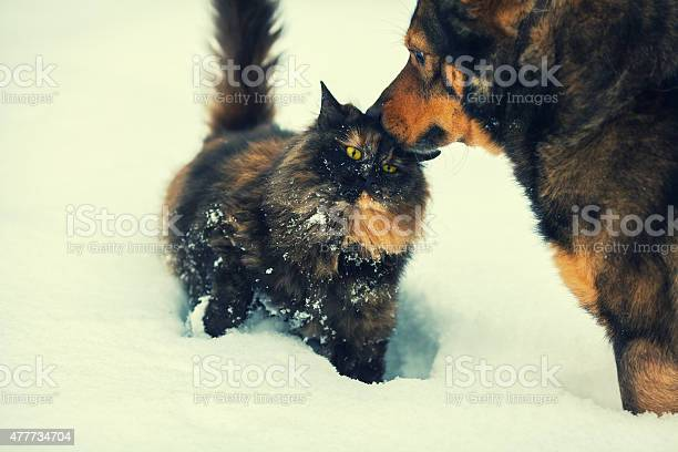 Dog and cat outdoors in snow picture id477734704?b=1&k=6&m=477734704&s=612x612&h=b bp7mr9j80fob73nbrvqix5lliuazj1jllytqaf6xg=