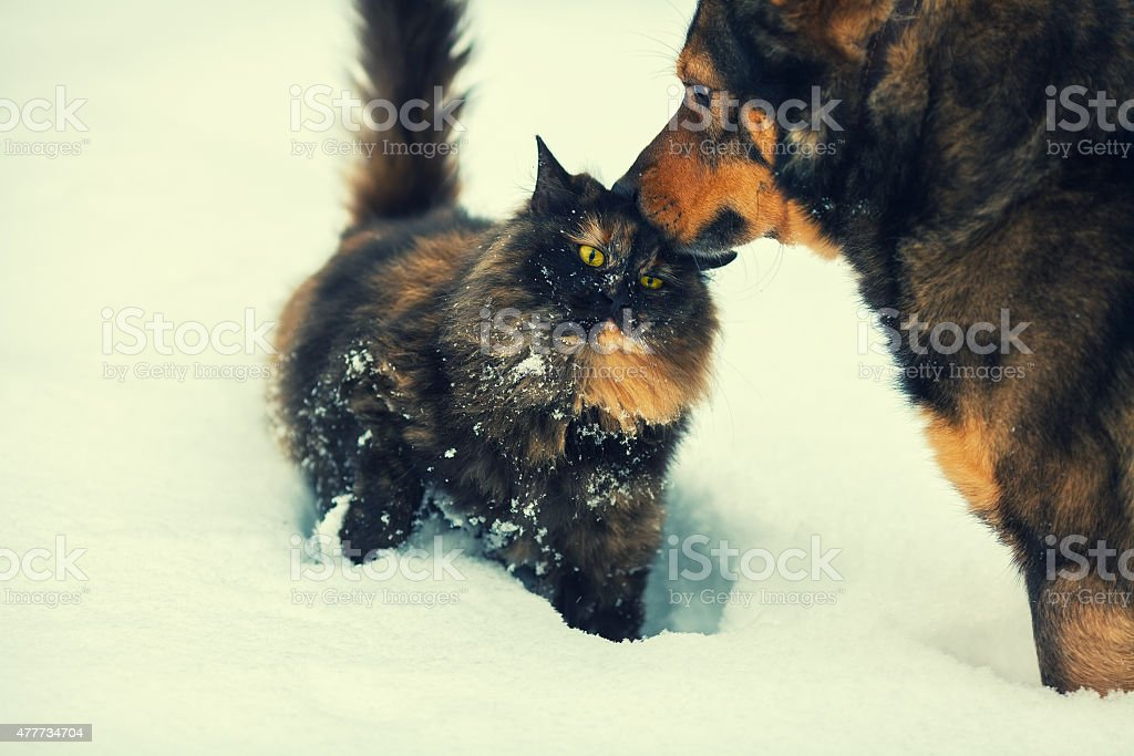 Dog and cat outdoors in snow stock photo