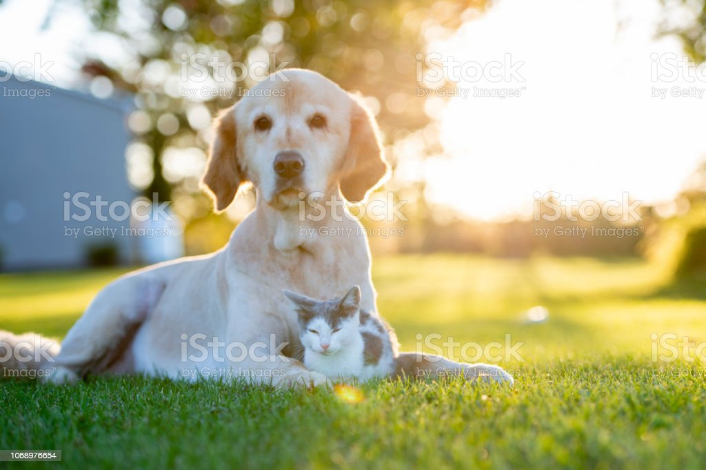 Dog and cat outside foto stock royalty-free