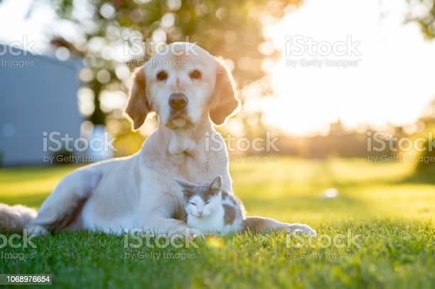Dog and cat outside picture id1068976654?b=1&k=6&m=1068976654&s=612x612&h=h5lnxb0jgesmm9xfhs4nu8yg1z8z7pmvhdn7fxsgqns=