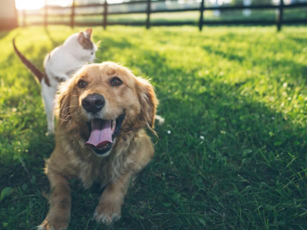 Dog and cat picture id1149878464?b=1&k=6&m=1149878464&s=612x612&w=0&h=9deua3pojytijhiahme wjy5dvjtbmzb4rq6fyszoh4=