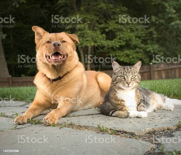 Dog and cat picture id140263396?b=1&k=6&m=140263396&s=612x612&h=p rmthgikxz 6y2iaiioet51zrxcgffufvjpkca2n1o=