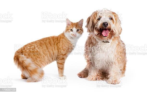 Dog and cat picture id170032123?b=1&k=6&m=170032123&s=612x612&h=gyqvphqp6lrobynuqwdmh6zgtuj7fwg7ffadswa2ujc=