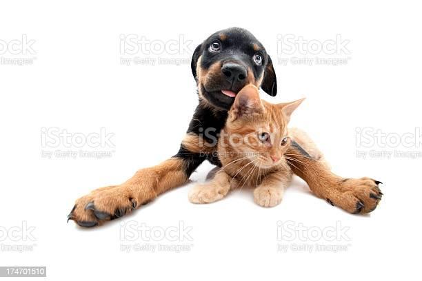 Dog and cat picture id174701510?b=1&k=6&m=174701510&s=612x612&h=kkgv 9vrm4irxptrg kzhc3noz7cngavd niexs2vdg=