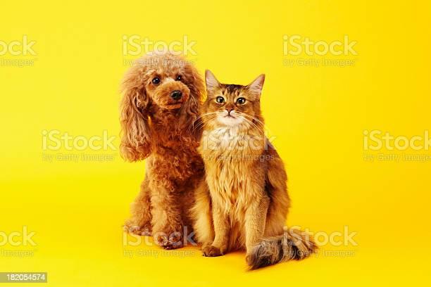 Dog and cat picture id182054574?b=1&k=6&m=182054574&s=612x612&h=jhfjhwas51tcflb5xu fa6ov8ihbsylanua4pstafba=