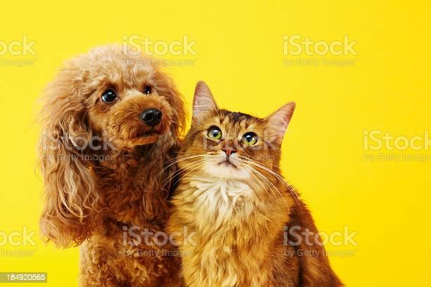 Dog and cat picture id184920565?b=1&k=6&m=184920565&s=612x612&h=yunkcv9piunubs8hiny9t5mrbgqpw wdzd8wcizktpo=