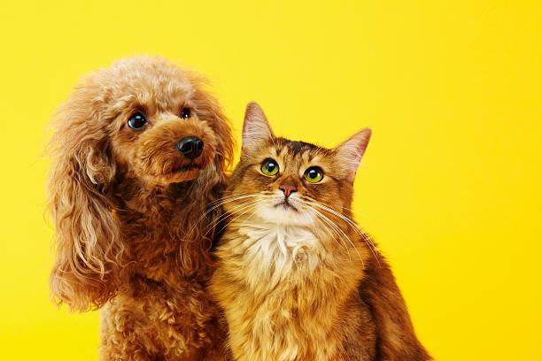 dog and cat - kattdjur bildbanksfoton och bilder