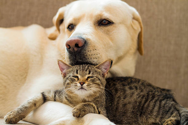 Dog and cat picture id453106885?b=1&k=6&m=453106885&s=612x612&w=0&h=hxryff frqlrw5genkni85k8xj8e2vh9hvhkajp5 pk=