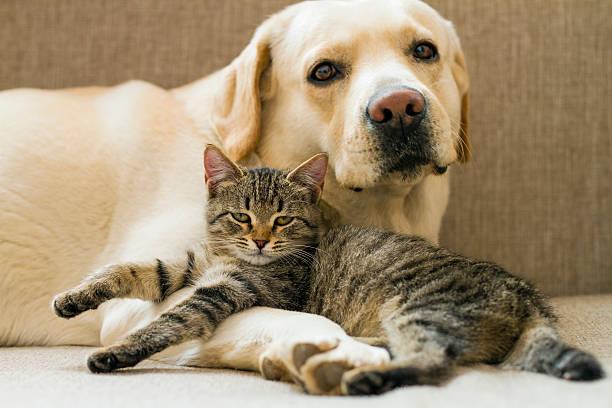 Dog and cat picture id453107293?b=1&k=6&m=453107293&s=612x612&w=0&h=avecis7vdtiq89dqv1qitd4tifhy1gpmdniibc6wfxg=