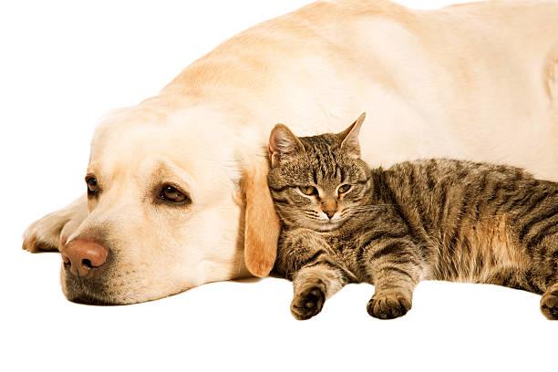 Dog and cat picture id466216257?b=1&k=6&m=466216257&s=612x612&w=0&h=6vnwp8qiyqgwjwtaabjnadnzrdmdxm5nab9l8xhtqtw=