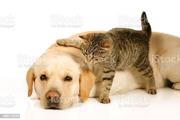 Dog and cat picture id466216259?b=1&k=6&m=466216259&s=612x612&h= hgzvn3cfky5n9txnje6x3ntktdhrmaabdxb5post0w=