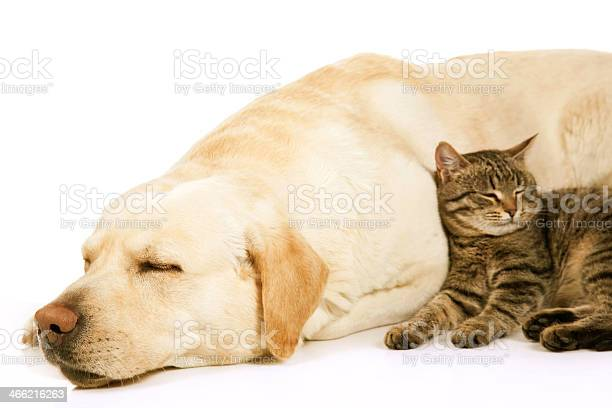 Dog and cat picture id466216263?b=1&k=6&m=466216263&s=612x612&h=5gfycc2pplhawvfdafkxyxp7bckxqr5age2ohbxcuto=