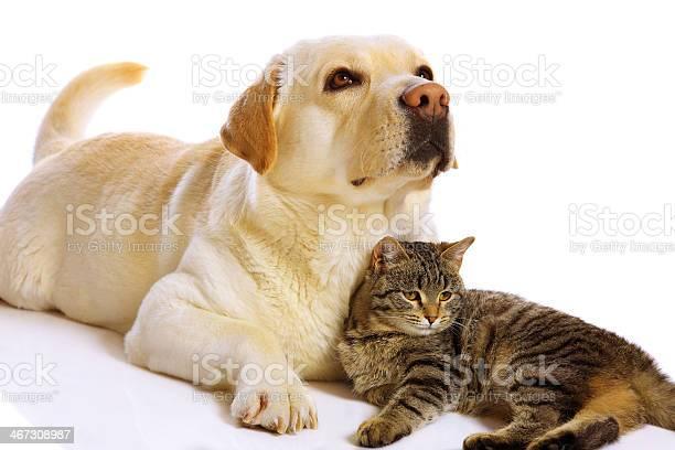 Dog and cat picture id467308987?b=1&k=6&m=467308987&s=612x612&h=ainfkmxkrx0fxg6xppa  5xu1eeemglax13o6sesxts=