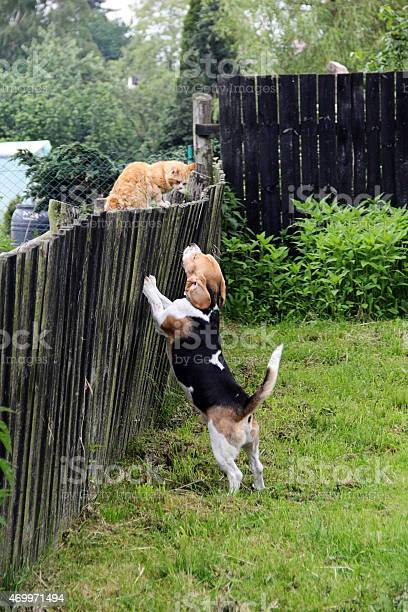 Dog and cat picture id469971494?b=1&k=6&m=469971494&s=612x612&h=luj9j5b1gfg el2 hxhxgorxb0xdo8iei2ctvahbpeu=