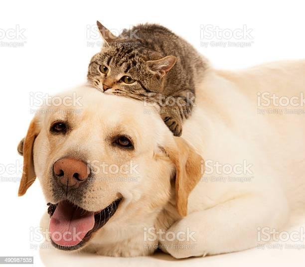 Dog and cat picture id490987535?b=1&k=6&m=490987535&s=612x612&h=axiueeqz6n5k5veewvdsqbgeh898sbjurupoynxnoco=