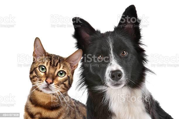 Dog and cat picture id494497908?b=1&k=6&m=494497908&s=612x612&h=0qpvutmgebeyisxlngxfommwuczewv1il285q4kjdjy=