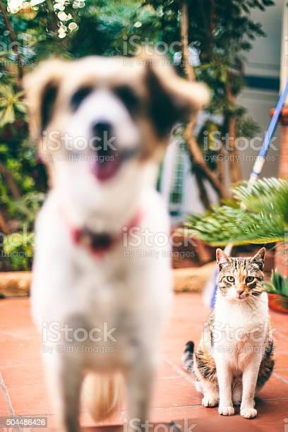 Dog and cat picture id504486426?b=1&k=6&m=504486426&s=612x612&h=shicp2ixucbaexnh19bxcx 8lbkakgtlbztowvgrk1c=