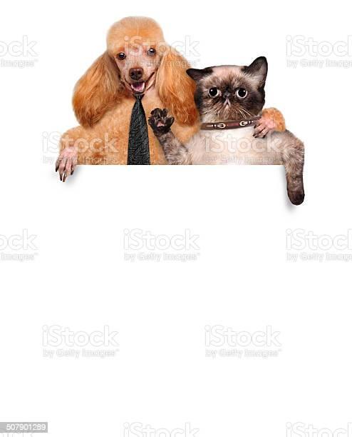 Dog and cat picture id507901289?b=1&k=6&m=507901289&s=612x612&h=wtztlprfpquagfavs346scmshjocnhple4kfcom mao=