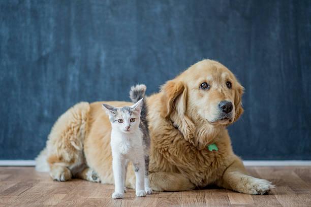 Dog and cat picture id626965350?b=1&k=6&m=626965350&s=612x612&w=0&h=dbxswq5k1idr8l2x3kcyloyx4j9qpqmokxh8g53qj5m=