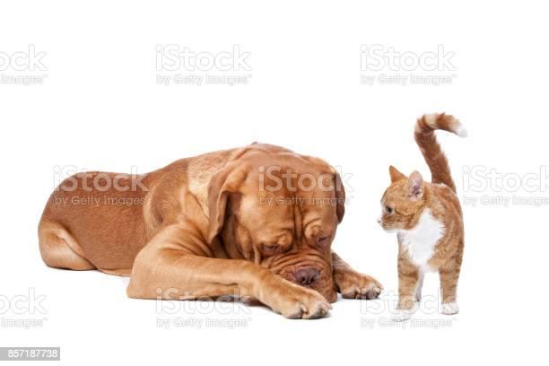 Dog and cat picture id857187738?b=1&k=6&m=857187738&s=612x612&h=g5oo0brxcj4nv9ibxom43mvczl6z5jyh4wxmnlslihk=