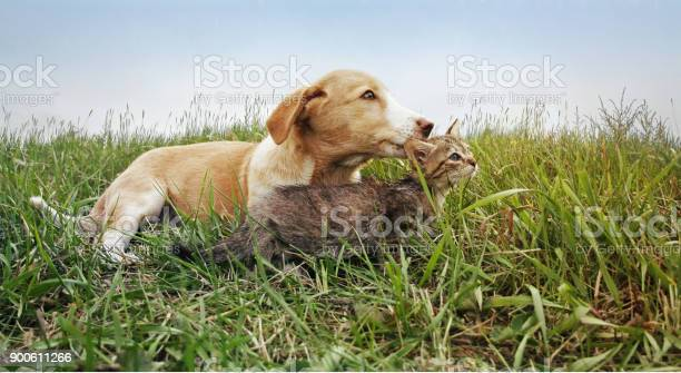 Dog and cat picture id900611266?b=1&k=6&m=900611266&s=612x612&h=4wxaihhioua7mngshtnq4wp2vvma1weu0lozwdaeyk8=