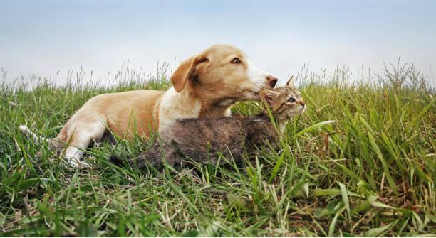 Dog and cat picture id900611266?b=1&k=6&m=900611266&s=612x612&w=0&h=0egkih3a eb8ogo2hhrk1iptbgyijosl4j6moynn 14=