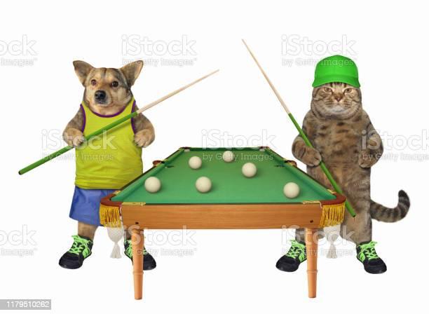 Dog and cat play billiards picture id1179510262?b=1&k=6&m=1179510262&s=612x612&h=j9ozxfjju3y jajapsbhrc4fif6lt5ypmihfbvn scu=