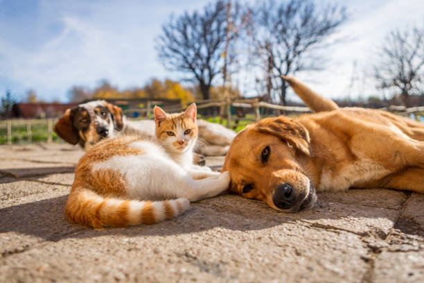 Dog and cat play together cat and dog lying outside in the yard dog picture id1194478330?b=1&k=6&m=1194478330&s=612x612&w=0&h=xqittm7cwrq4m4rn2 pzgifjzcw vsjnx76fls3mwqi=