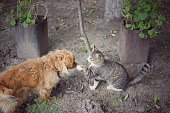 istock dog and cat play together outside 912139032