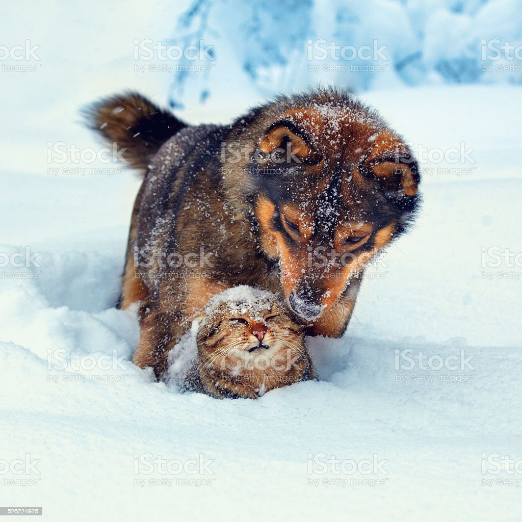Dog and cat playing outdoor in snow stock photo