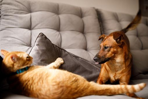 Pet owner.