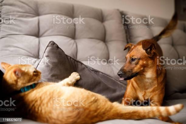 Dog and cat playing picture id1193325072?b=1&k=6&m=1193325072&s=612x612&h=hurvineppv1edvuasqwnr8l faqioa9uww0zysv9sjq=