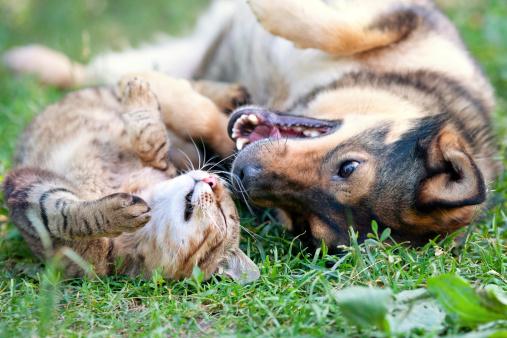 Dog and cat playing together outdoor