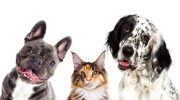 Hund und Katze Porträt – Foto