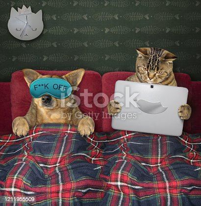 539672394 istock photo Dog and cat resting in bed 2 1211955509