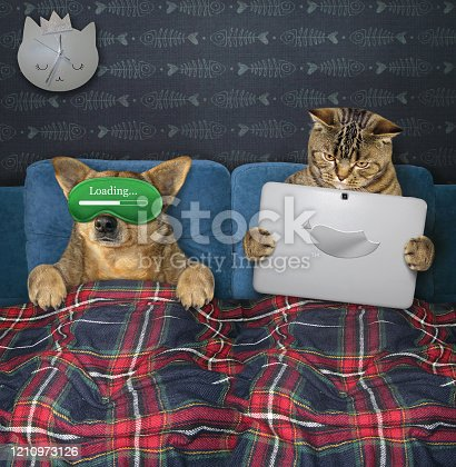 539672394 istock photo Dog and cat resting in bed 1210973126