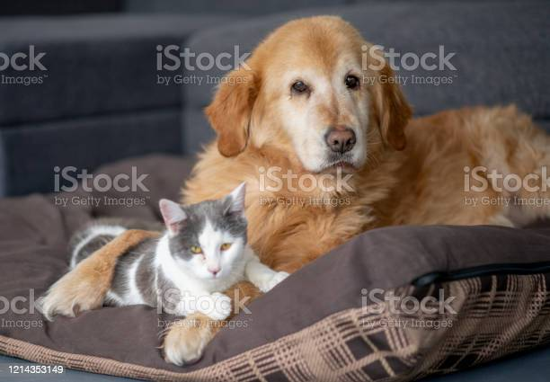 Dog and cat sit together stock photo picture id1214353149?b=1&k=6&m=1214353149&s=612x612&h=vy2vhheue9kratqcrevpegak04ypgdqvfxgui37mrdm=