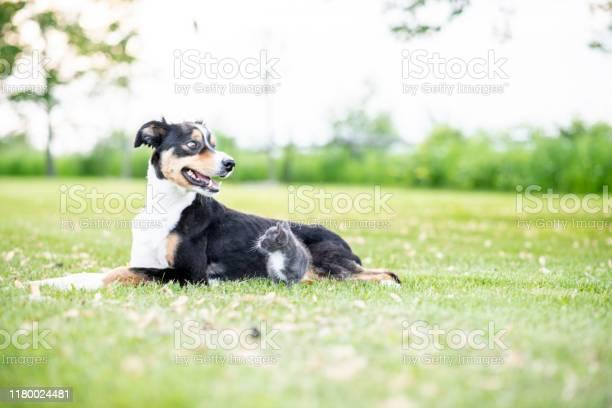 Dog and cat sitting in the grass stock photo picture id1180024481?b=1&k=6&m=1180024481&s=612x612&h=efbwfhmuzrjbbfnaacgdyjwmdtp3pyyzuurzuvcblaq=