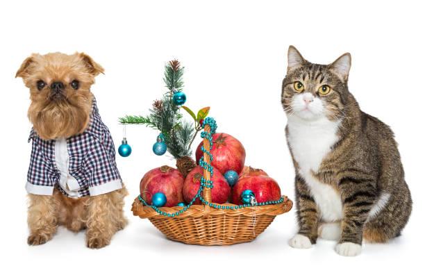 Dog and cat sitting near a christmas basket picture id892153242?b=1&k=6&m=892153242&s=612x612&w=0&h=jxthraeoob 6 ad2zrpopzpwic 4qgp ou1rpgtqzac=