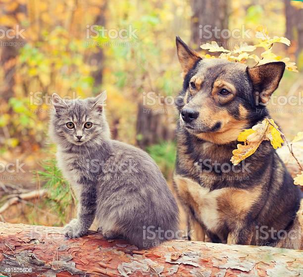 Dog and cat sitting together outdoors in autumn forest picture id491525606?b=1&k=6&m=491525606&s=612x612&h=vggv9rkcdhbxj4u3zukdmxsr3xopscfu74cnb n0k1y=
