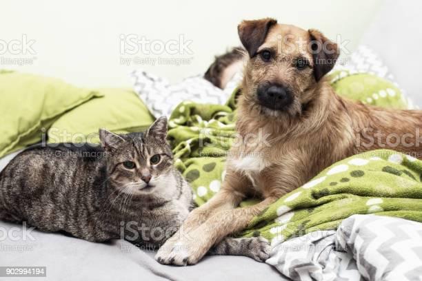 Dog and cat sleep together picture id902994194?b=1&k=6&m=902994194&s=612x612&h=rv8bohlki784fsgki0idt7o6c4ke3rclowj8ncpjccu=