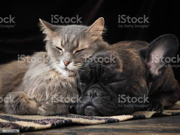 Dog and cat sleeping together cute hugging each other picture id682520778?b=1&k=6&m=682520778&s=612x612&h=lm7mbahtxemobjmwygfxl 4dau5x1i1iqxsb7tswpgs=