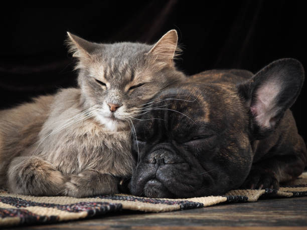Dog and cat sleeping together cute hugging each other picture id682520778?b=1&k=6&m=682520778&s=612x612&w=0&h=dowkzc1h291q9wxewaupbdbvxzbhktzata6oihir82m=